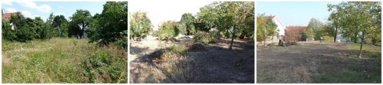 Najmä v hornej časti záhrady prišlo na jeseň 2013 k veľkým zmenám, najmä vďaka brigáde, na ktorú prišlo takmer 50 dobrovoľníkov!