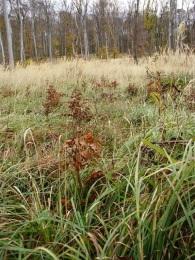 Stovky sadeničiek buka lesného vysadili Mestské lesy v Bratislave (MLB), ktorým ich venovala spoločnosť Lidl Slovenská republika.