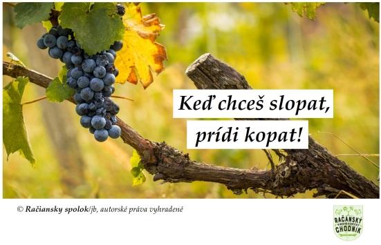 12 prikázaní o vinohradoch