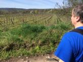 Naše vinohrady si zaslúžia viac pozornosti.